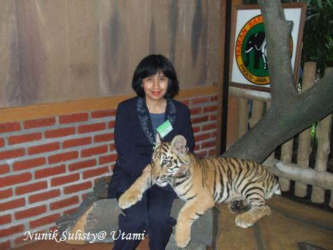 Anak  harimau yang terawat dengan baik