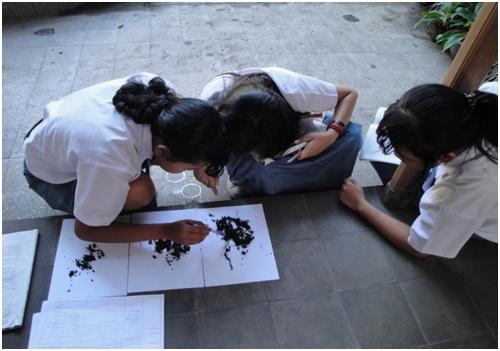 Gambar 2 : menghitung populasi cacing dari sampel tanah yang diamati