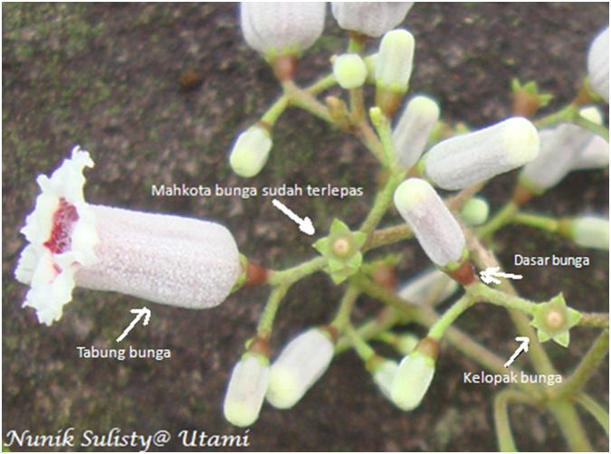 Kelopak bunga, Dasar bunga dan tabung bunga