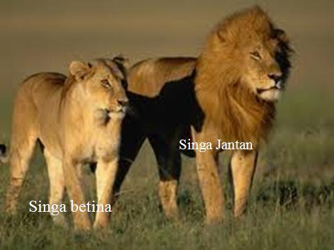 Perbedaan yang tampak Jelas antara hewan jantan dan betina